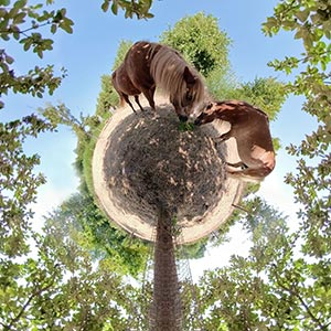 Little Planets - 360°-Fotografie